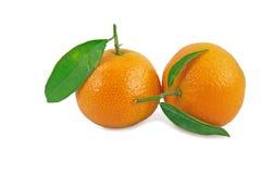 πράσινα tangerines δύο φύλλων Στοκ Φωτογραφίες
