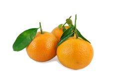 πράσινα tangerines τρία φύλλων Στοκ Φωτογραφίες