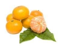 πράσινα tangerines φύλλων Στοκ Εικόνες