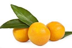 πράσινα tangerines φύλλων Στοκ Φωτογραφία