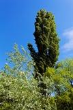 Πράσινα treetops Στοκ Εικόνες
