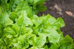 πράσινα vagetables Στοκ φωτογραφία με δικαίωμα ελεύθερης χρήσης