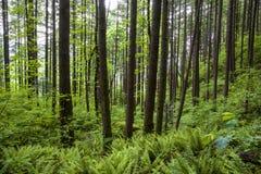 Πράσινες δάσος και φτέρες στοκ εικόνα