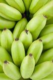Πράσινες ακατέργαστες χρυσές μπανάνες στα άσπρα τρόφιμα φρούτων μπανανών MAS Pisang υποβάθρου υγιή που απομονώνονται Στοκ Φωτογραφία