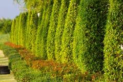 Πράσινες εγκαταστάσεις κήπων Στοκ Εικόνα