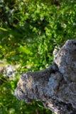 Πράσινες εγκαταστάσεις και πέτρα Στοκ Εικόνες