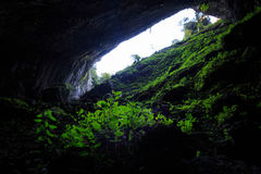 Πράσινες εγκαταστάσεις μέσα στη σπηλιά Στοκ φωτογραφίες με δικαίωμα ελεύθερης χρήσης