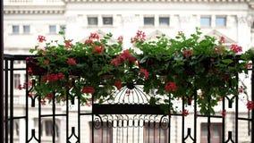 Πράσινες εγκαταστάσεις με τα κόκκινα λουλούδια στα δοχεία απόθεμα βίντεο
