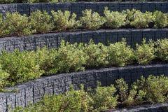 Πράσινες εγκαταστάσεις στα πεζούλια πετρών στο αστικό περιβάλλον Στοκ Εικόνες