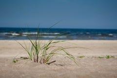 Πράσινες εγκαταστάσεις στην άμμο παραλιών με τη θάλασσα στο υπόβαθρο στοκ εικόνες