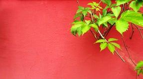 Πράσινες εγκαταστάσεις στον κόκκινο τοίχο Στοκ εικόνα με δικαίωμα ελεύθερης χρήσης