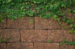 Πράσινες εγκαταστάσεις στον πέτρινο τοίχο Στοκ εικόνες με δικαίωμα ελεύθερης χρήσης