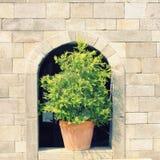 Πράσινες εγκαταστάσεις στον τοίχο πετρών στοκ εικόνα