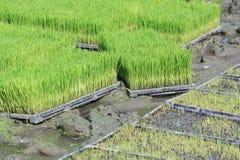 Πράσινες εγκαταστάσεις στο καλάθι στοκ εικόνα με δικαίωμα ελεύθερης χρήσης