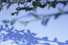Πράσινες εγκαταστάσεις στο μπλε υπόβαθρο Στοκ Εικόνες