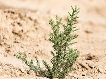 Πράσινες εγκαταστάσεις στο ξηρό χώμα στη φύση Στοκ εικόνες με δικαίωμα ελεύθερης χρήσης