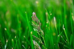 Πράσινες λεπίδες Στοκ φωτογραφία με δικαίωμα ελεύθερης χρήσης