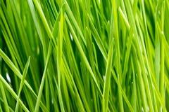 Πράσινες λεπτομέρειες χλόης Στοκ Φωτογραφίες