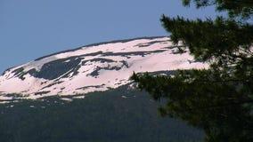 Πράσινες ερυθρελάτες άποψης Βουνό με την πράσινη δασική και χιονίζοντας κορυφή θερινό ηλιόλουστο swallowtail χλόης ημέρας πεταλού απόθεμα βίντεο