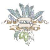 Πράσινες ελιές με τα φύλλα στις κορδέλλες Στοκ Εικόνες