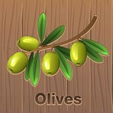 Πράσινες ελιές σε έναν κλάδο διανυσματική απεικόνιση