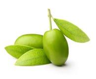 πράσινες ελιές φύλλων Στοκ Εικόνα