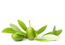 πράσινες ελιές φύλλων Στοκ εικόνα με δικαίωμα ελεύθερης χρήσης