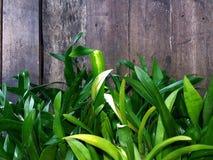 Πράσινες και καφετιές backgound και σύσταση Στοκ εικόνες με δικαίωμα ελεύθερης χρήσης