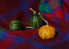 Πράσινες κολοκύθες με την πορτοκαλιά warty διακοσμητική κολοκύθα στο κόκκινο καρό Στοκ εικόνα με δικαίωμα ελεύθερης χρήσης