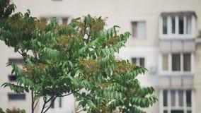 Πράσινες κορώνες των δέντρων μεταξύ της κινηματογράφησης σε πρώτο πλάνο σπιτιών απόθεμα βίντεο