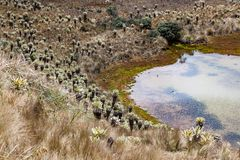 Πράσινες λιμνοθάλασσες στο πόδι του ηφαιστείου Chiles στοκ εικόνες