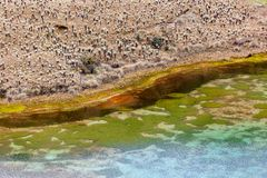Πράσινες λιμνοθάλασσες στο πόδι του ηφαιστείου Chiles στοκ φωτογραφία με δικαίωμα ελεύθερης χρήσης