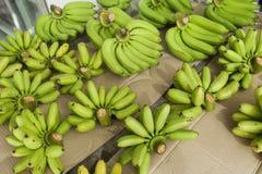 Πράσινες μπανάνες για την πώληση στην αγορά φρούτων, Koh Pha Ngan, Ταϊλάνδη Στοκ Εικόνες