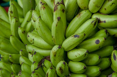 Πράσινες μπανάνες μωρών Μούσα είναι ένα από τρία γένη στην οικογένεια Musaceae, περιλαμβάνει τις μπανάνες και plantains Στοκ Φωτογραφία