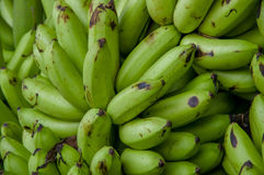 Πράσινες μπανάνες μωρών Μούσα είναι ένα από τρία γένη στην οικογένεια Musaceae, περιλαμβάνει τις μπανάνες και plantains Στοκ φωτογραφίες με δικαίωμα ελεύθερης χρήσης