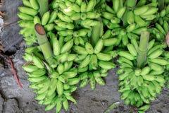 Πράσινες μπανάνες στην αγορά Στοκ Εικόνα