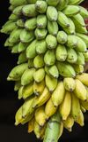 Πράσινες μπανάνες Στοκ Εικόνες