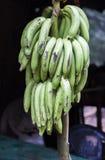 Πράσινες μπανάνες Στοκ εικόνα με δικαίωμα ελεύθερης χρήσης