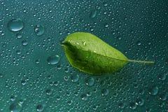 πράσινες νέες πτώσεις φύλλων και νερού της Apple στο πράσινο ecolo υποβάθρου Στοκ Εικόνα