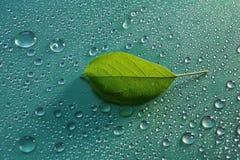 πράσινες νέες πτώσεις φύλλων και νερού της Apple στο πράσινο ecolo υποβάθρου Στοκ Εικόνες