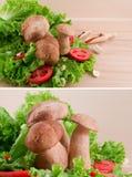 πράσινες ντομάτες σαλάτας μανιταριών σκόρδου Στοκ Εικόνες