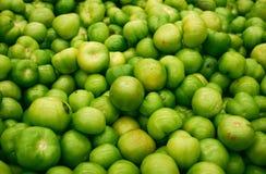 Πράσινες ντομάτες Στοκ εικόνα με δικαίωμα ελεύθερης χρήσης