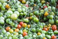 πράσινες ντομάτες unripe Στοκ Εικόνες