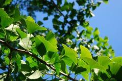 Πράσινες πεταλούδες στον ήλιο στοκ φωτογραφία