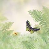 Πράσινες πεταλούδα και εγκαταστάσεις Στοκ εικόνες με δικαίωμα ελεύθερης χρήσης