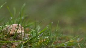 Πράσινες πτώσεις βροχής χλόης σαλιγκαριών φιλμ μικρού μήκους