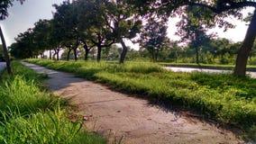 Πράσινες πλευρές στοκ φωτογραφία