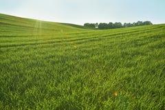 Πράσινες σειρές λόφων Στοκ εικόνες με δικαίωμα ελεύθερης χρήσης