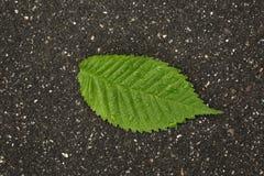 πράσινες σταγόνες βροχής φύλλων Στοκ Εικόνες
