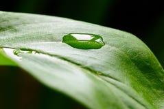 πράσινες σταγόνες βροχής & Στοκ Φωτογραφίες